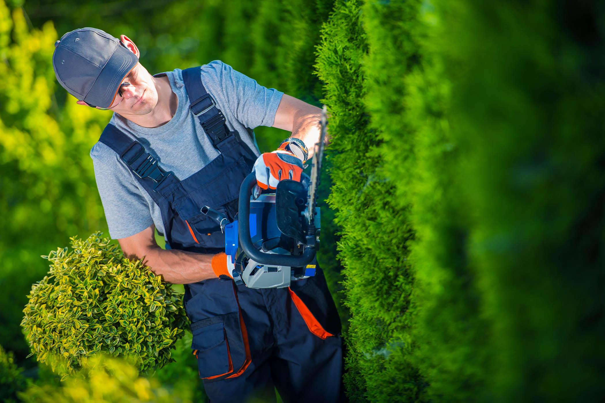 Des jardiniers professionnels